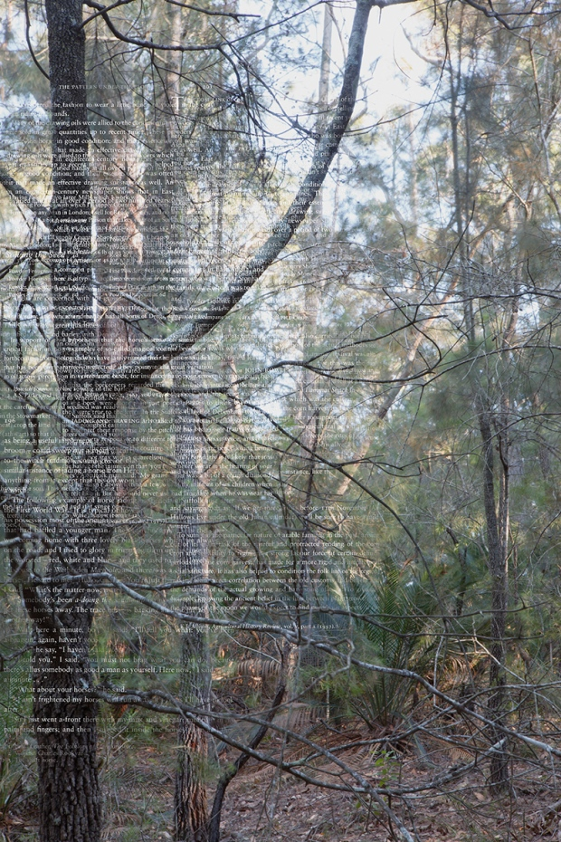 TreesPlantsandPrinciples